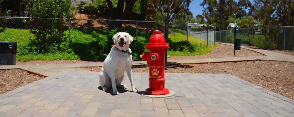 Escondido RV Dog Park
