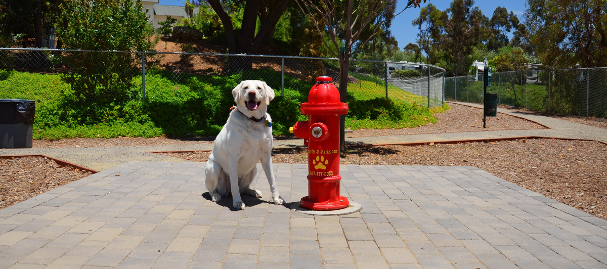 Dog Friendly Rv Park In Escondido Sunland Rv
