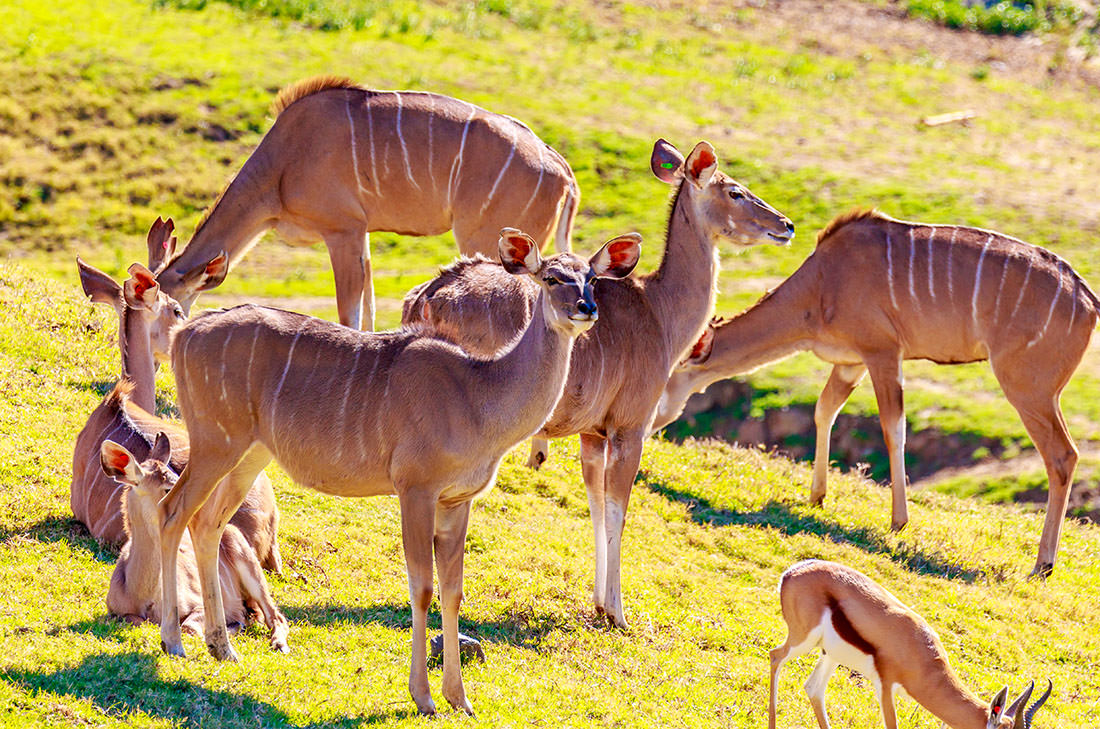 San Diego Zoo Safari Park is a great attraction to visit